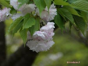 京都は今日もいい天気