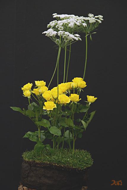 0902花フェスタ06