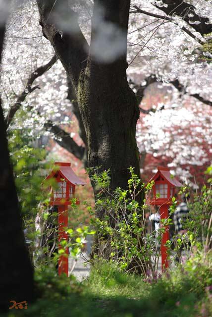 090412ボケ_冠神社02