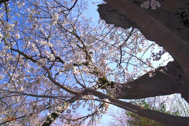 090412ボケ_冠神社05