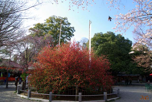090412ボケ_冠神社06