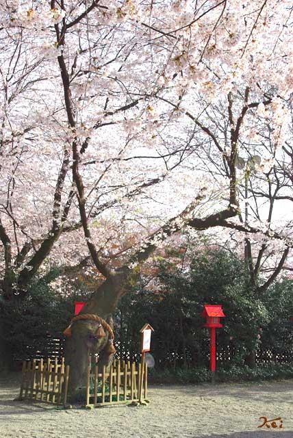 090412ボケ_冠神社09