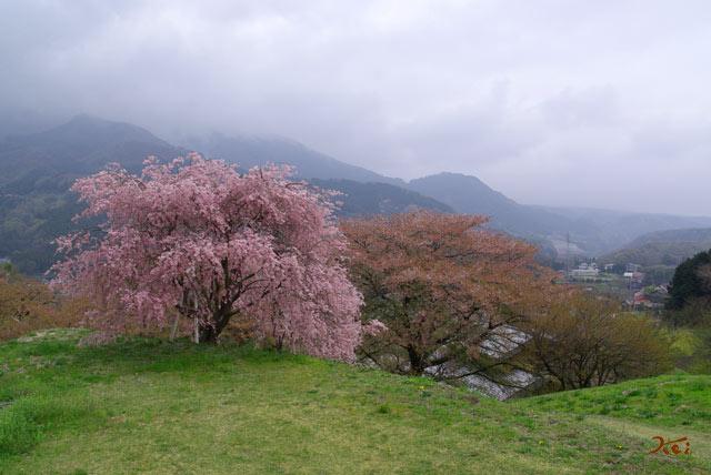 090418桜_箱島発電所1