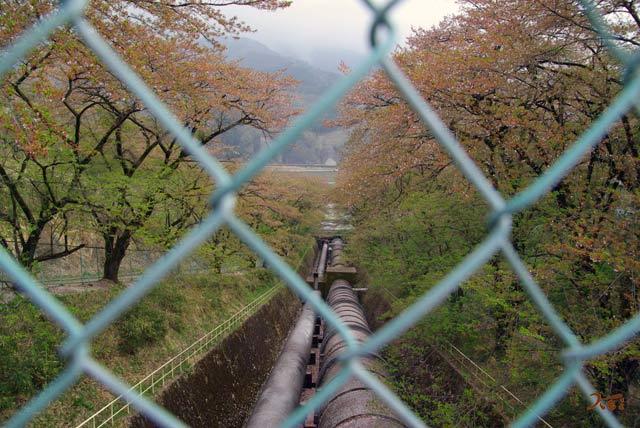 090418桜_箱島発電所3