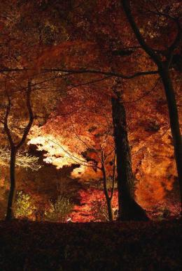 森林205