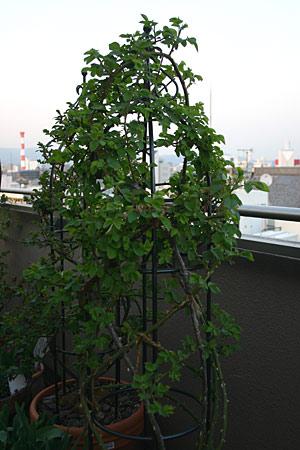 ashzentai.jpg