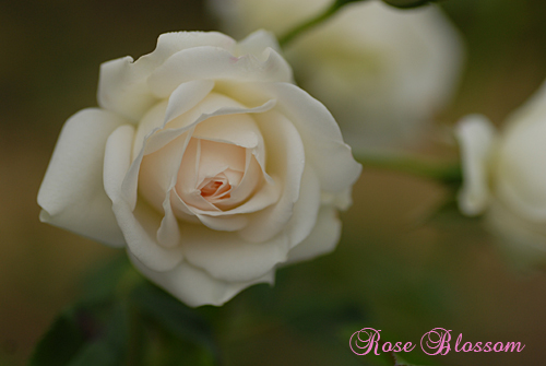 bridalgfan1106.jpg