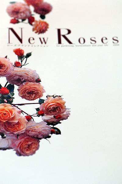 new-roses.jpg
