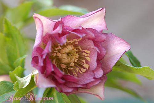 pinkdouble0227.jpg