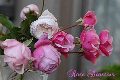 roseall.jpg