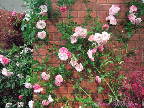 rosegardenwall.jpg