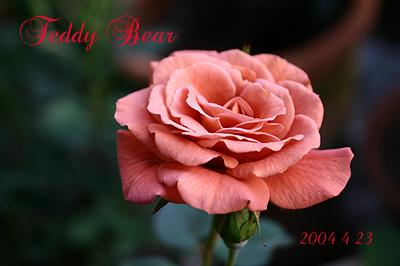 teddy20040423.jpg