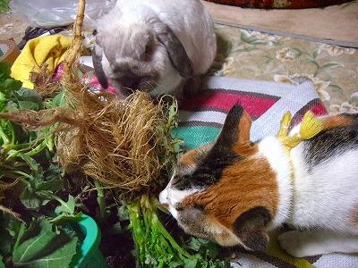 CIMG6739 野菜&ミー4