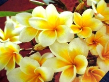 花パゴダフラワー