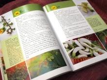 花野菜の本2
