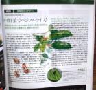 WOM四角豆