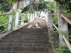 フアヒン階段の犬
