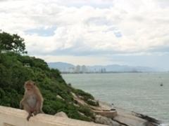 フアヒン海辺の猿