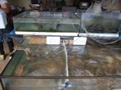 フアヒン市場蟹