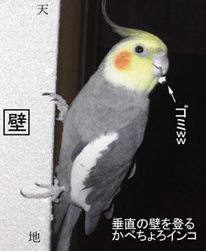 壁をよじ登る鳥