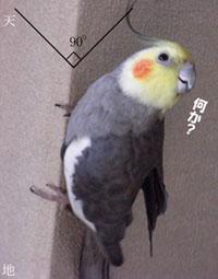 角を使ってよじ登る鳥