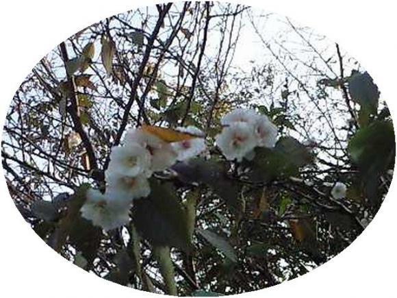 桜が咲いた!???2