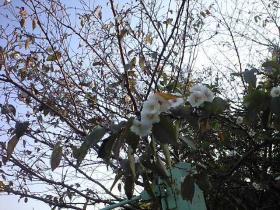 桜が咲いた!???1