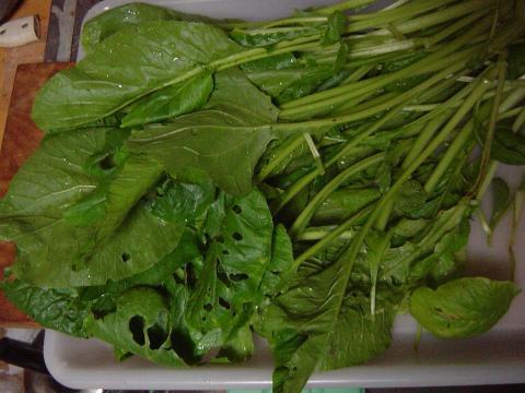 小松菜の炒めもの1