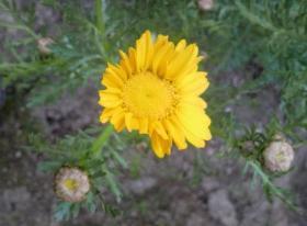 この花の名前分かりますか?3