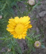 この花の名前分かりますか?1