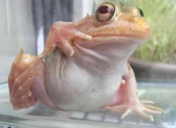 黄金のカエル発見!!2