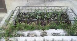 花壇のドラ猫対策2