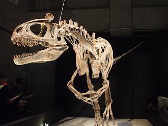 クリオロフォサウルス B10