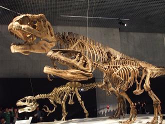 マプサウルス 親子 B10
