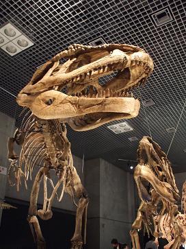 マプサウルス 前 B11