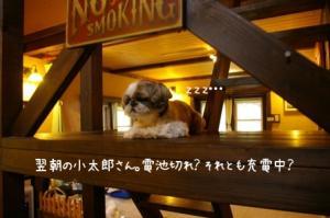 翌朝の小太郎…放心中