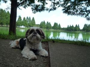 小太郎は公園をお散歩です