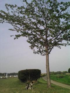 20090418142119.jpg