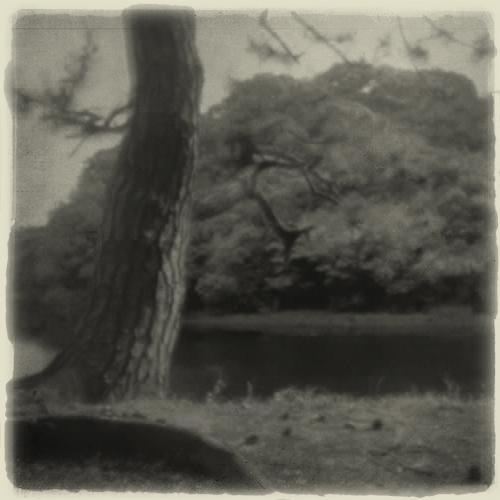 pine_tree_monochrome.jpg