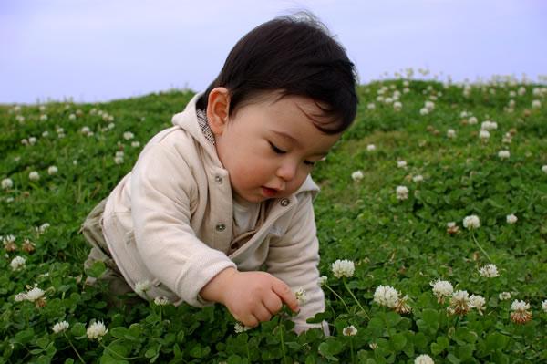 大草原の?