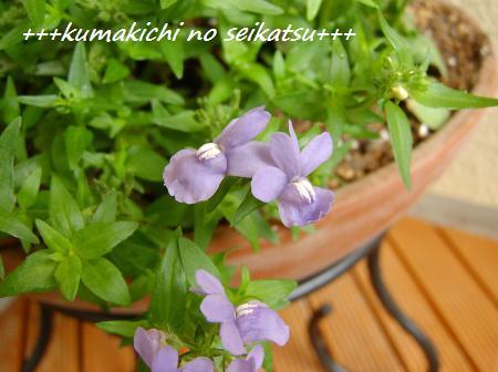 SANY4567_convert_20090416085952.jpg