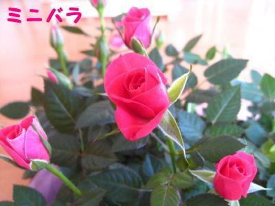 IMG_1242.jpg