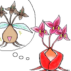 恋するベニヒメ