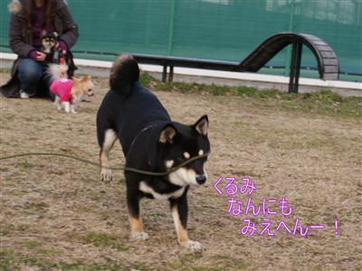 DSC04251く_R