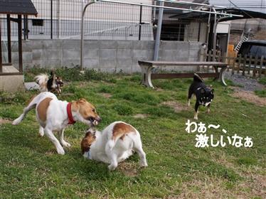 DSC04309く_R