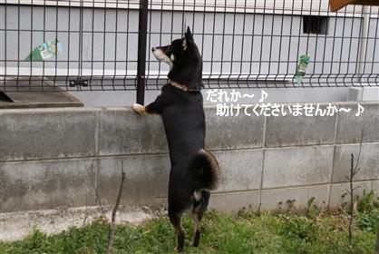DSC04375く_R