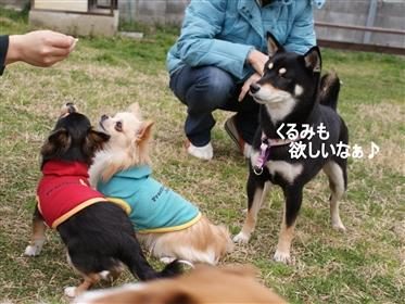 DSC04386く_R