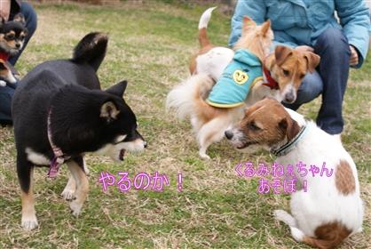 DSC04400く_R