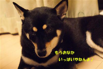 DSC03238_.jpg