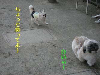 ドッグラン9
